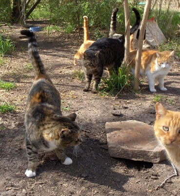 FuRR - Donations - Feral Cat Colony